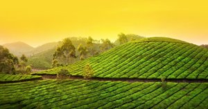 Munnar at a glance